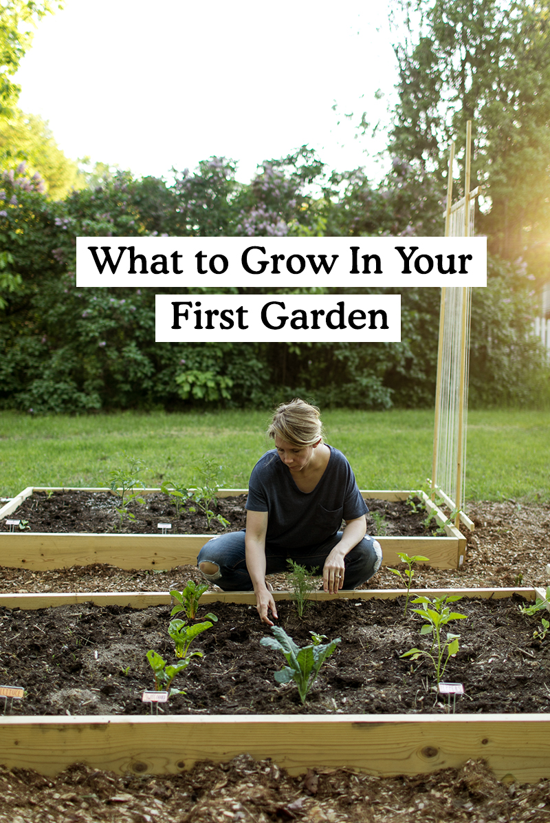 What to Grow In your First Garden as a Beginner. Get the full list on The Fresh Exchange.