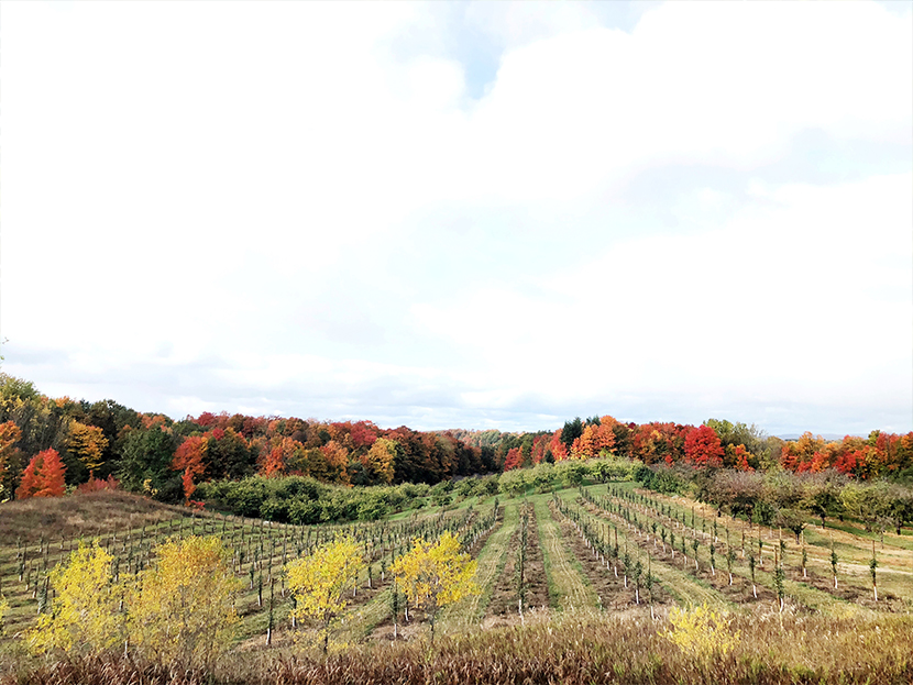 The BEst things to do in Traverse City, Michigan in the Fall from The Fresh Exchange.