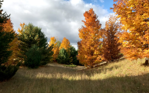 Everything We Learned When Choosing Our Land in Leelanau County, Michigan
