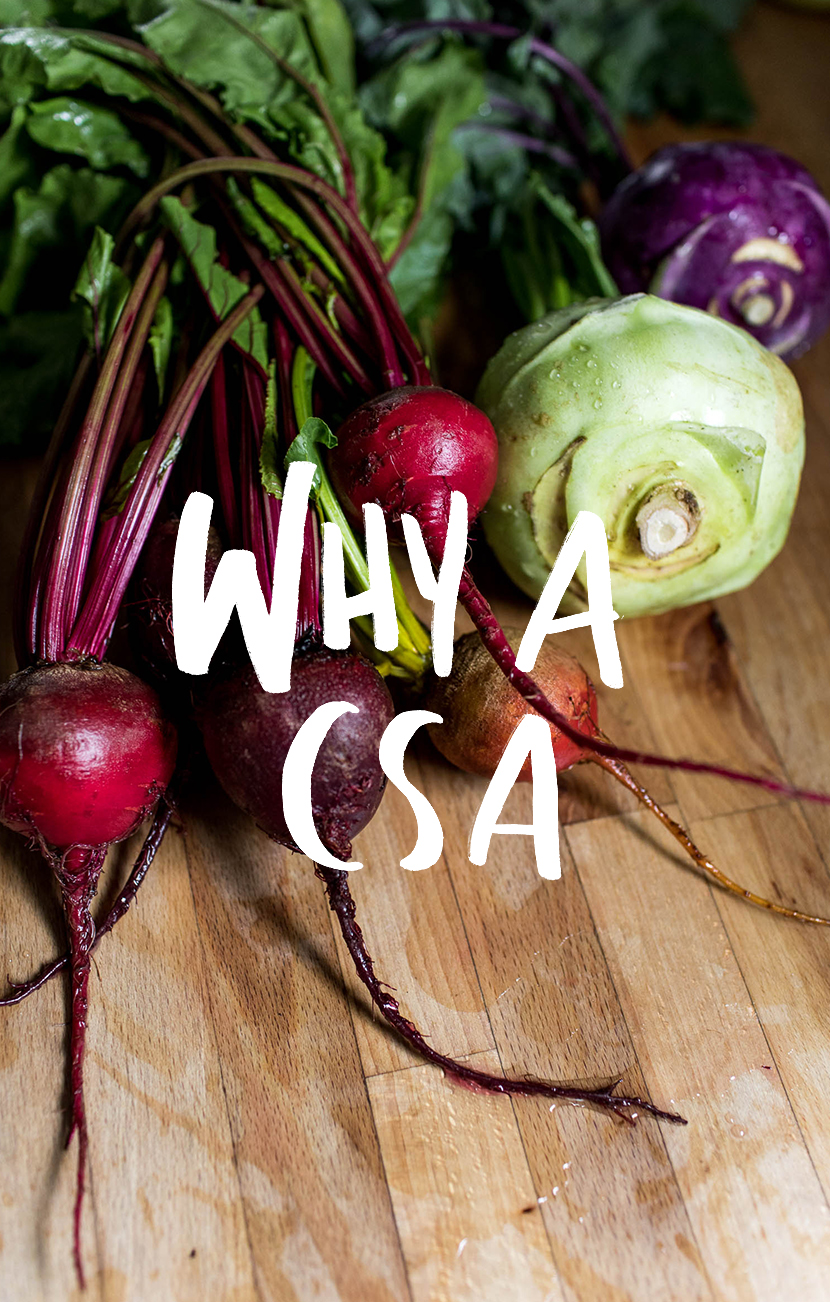 Been wondering about a way to eat seasonally? Getting a CSA is a great way to eat in season easily and affordably for the warm months of the year or even all year around depending on where you live.