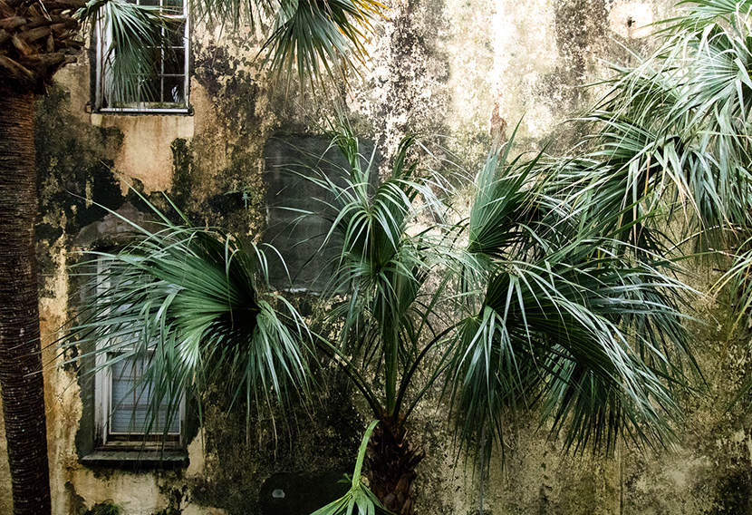 A Weekend in Charleston with Canon | The Fresh Exchange
