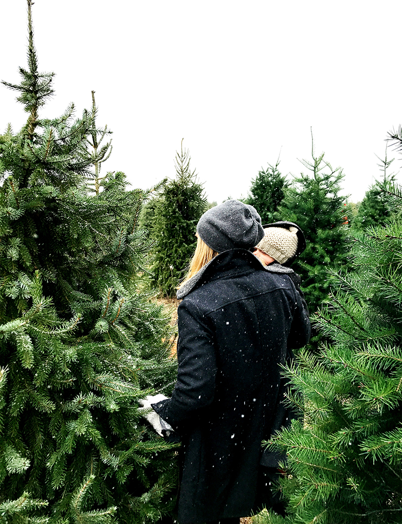 A Christmas Tradition of getting Christmas tree marks the beginning of the holiday season | The Fresh Exchange
