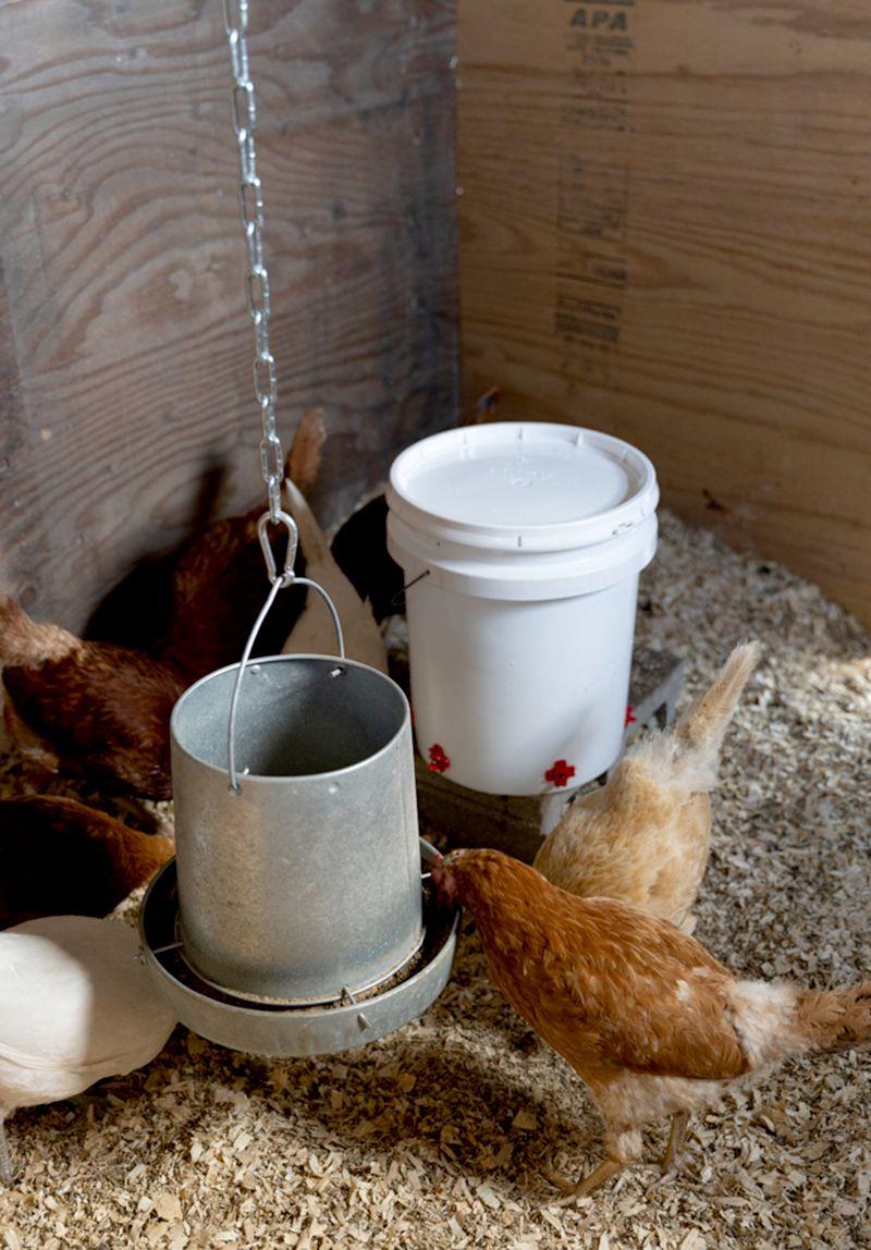 bucket chicken feeder - diy water feeder used in a barn