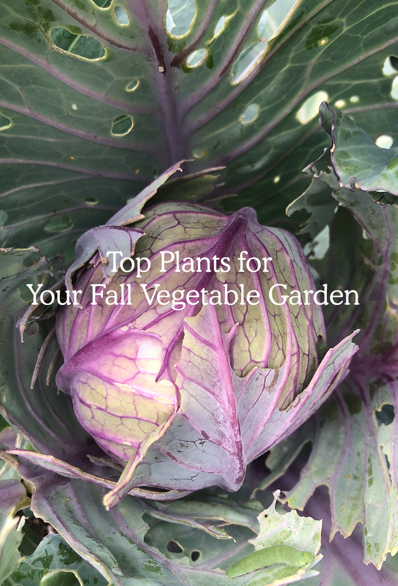 Fall vegetable Garden Planting Guide for Beginners