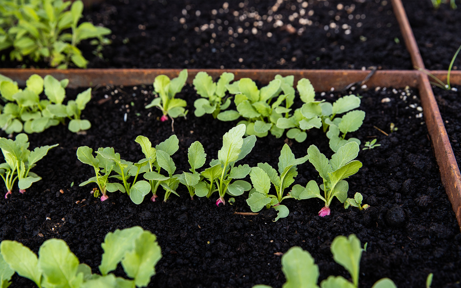 How to fill Your Raised Beds and What til Fill them with. More on The Fresh Exchane