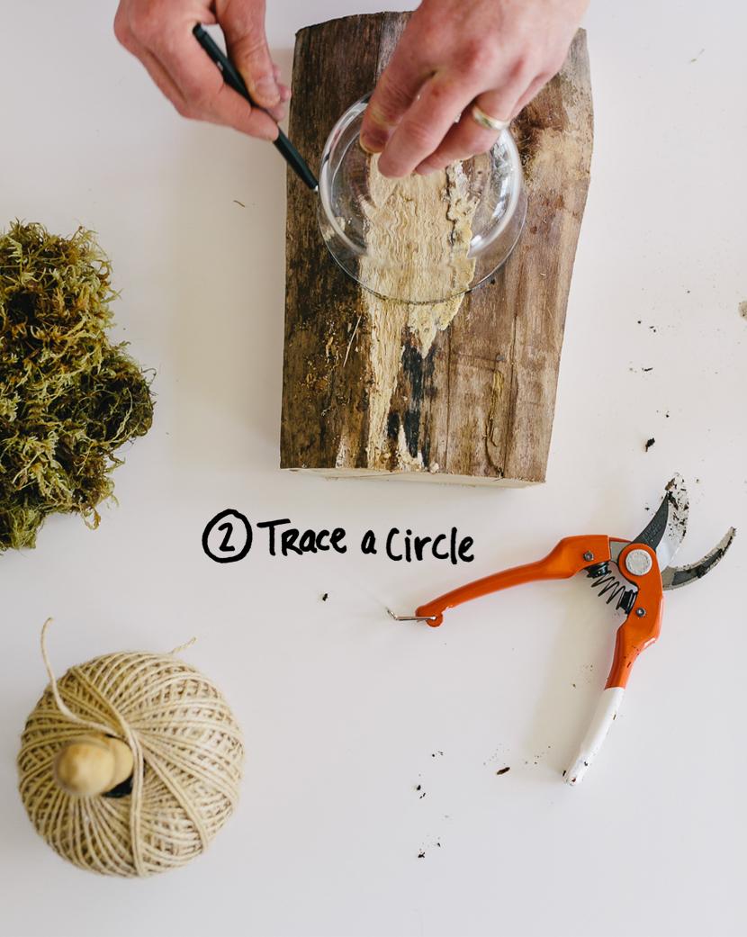Garden DIY: Mounting A Staghorn Fern | The Fresh Exchange