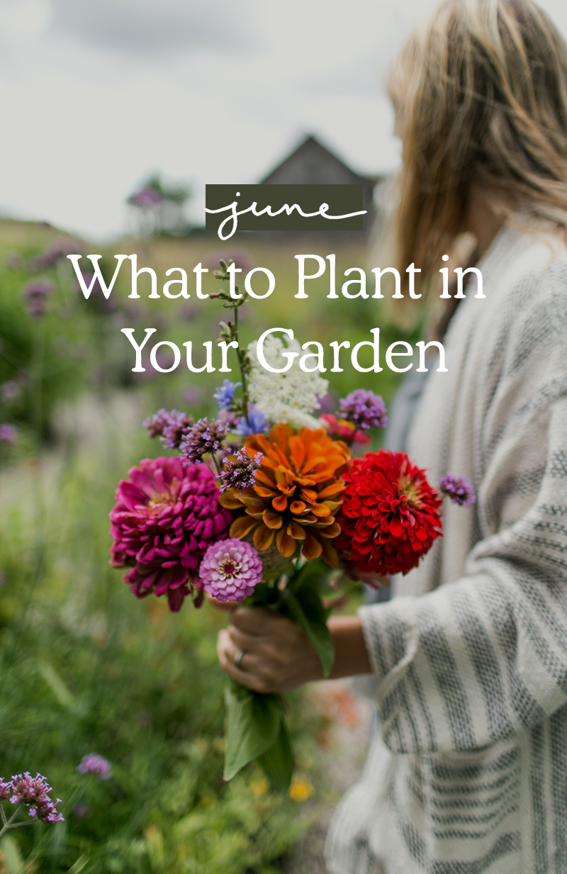 What you should plant in your garden in June on The Fresh Exchange