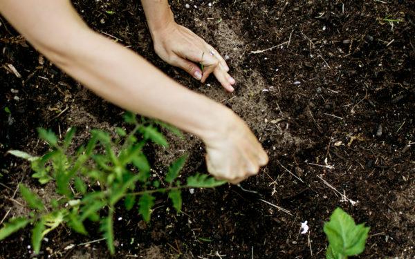 Garden soil for beginners.