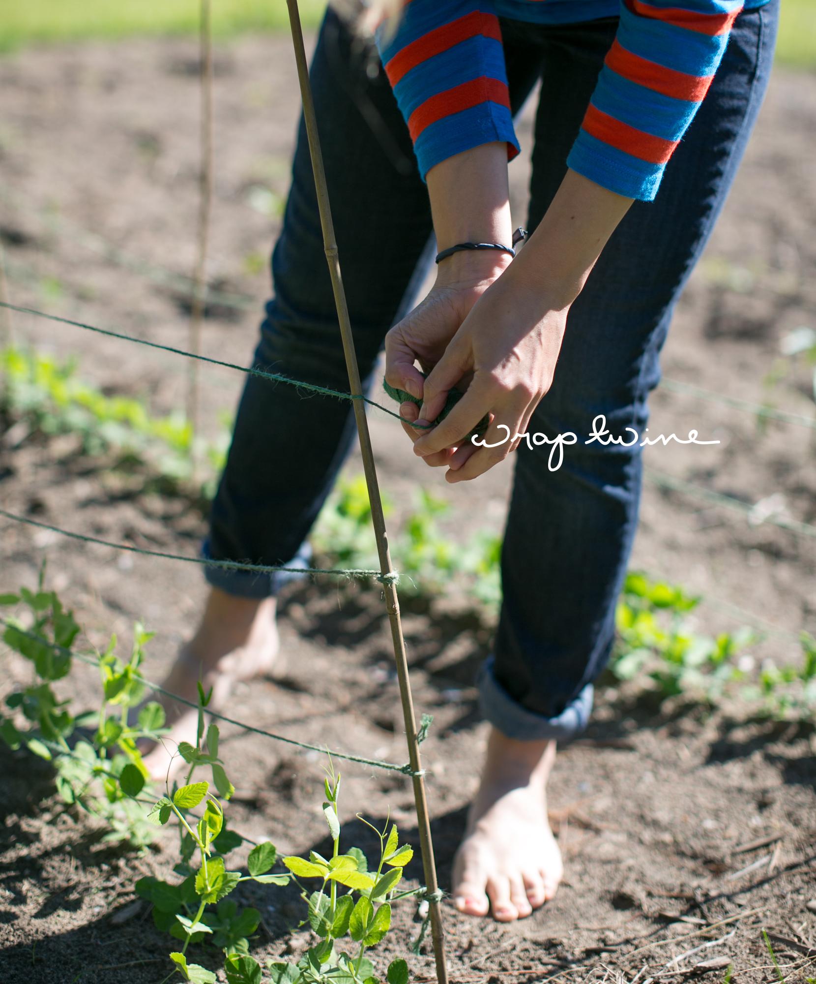 Garden: Sugar Snap Peas | The Fresh Exchange