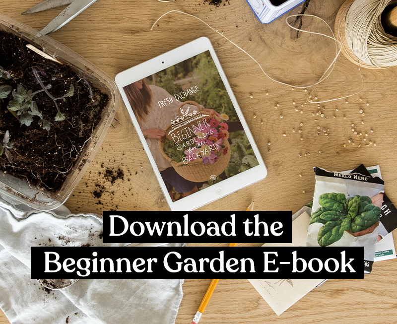 Best tips for your first Raised Bed Garden from Megan Gilger of Fresh Exchange