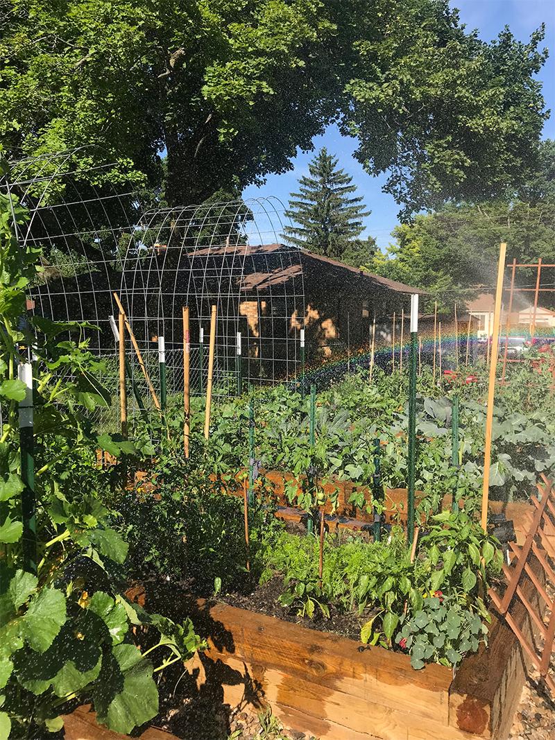 Garden Tour: Megan Stubbs of Grands Rapids, Michigan