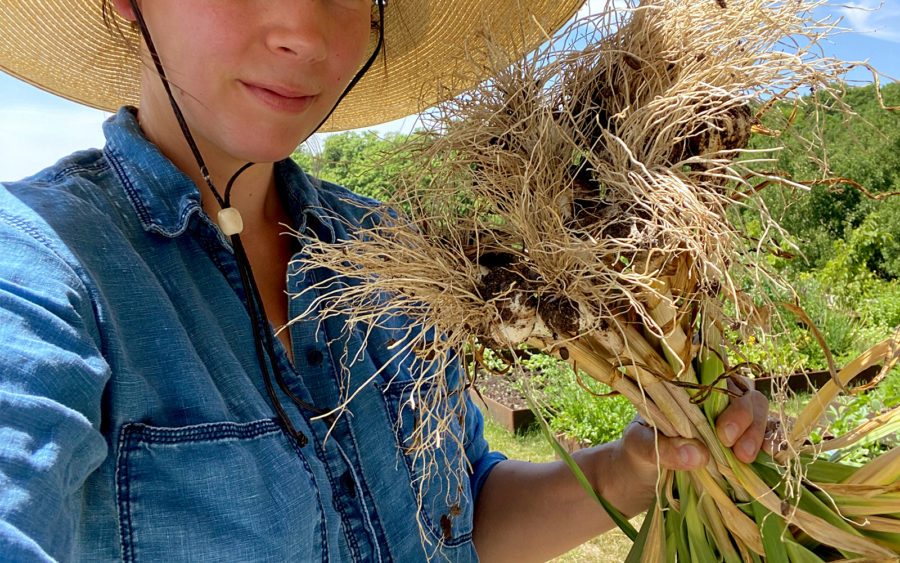 How to Harvest and Braid Garlic on Fresh Exchange