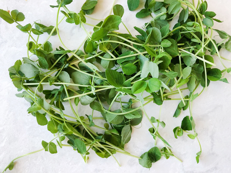 How to grow Microgreens at home easily and simply. Get the full tutorial