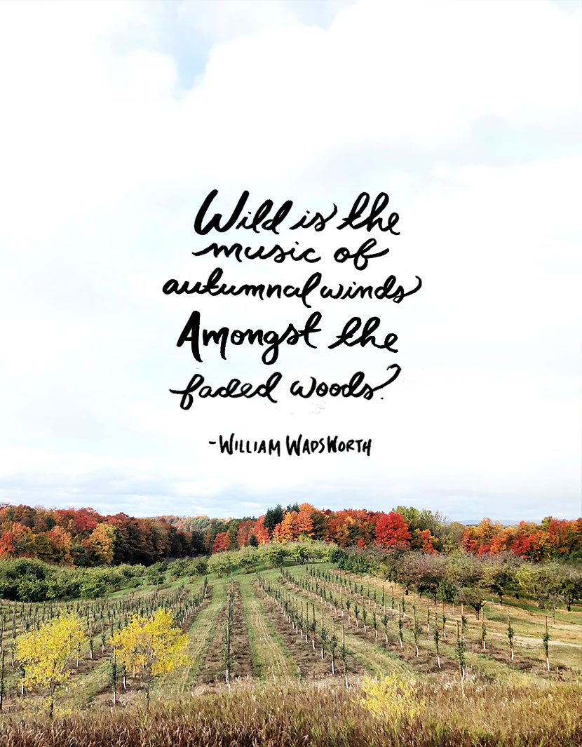 Thoughts on the end of October and favorite quotes for Fall. More on The Fresh Exchange.
