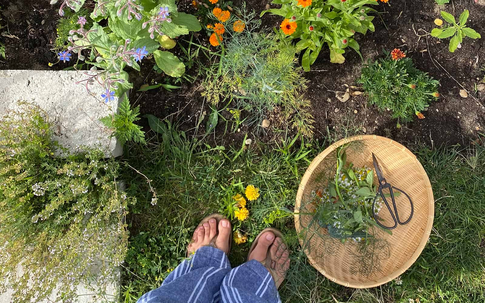 How to Grow an Herb Garden Successfully - Fresh Exchange