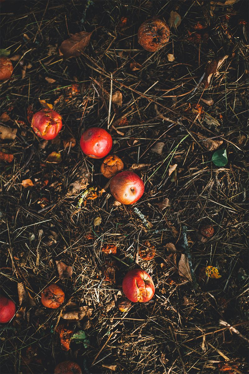 what to compost - rotten fruits and leaves