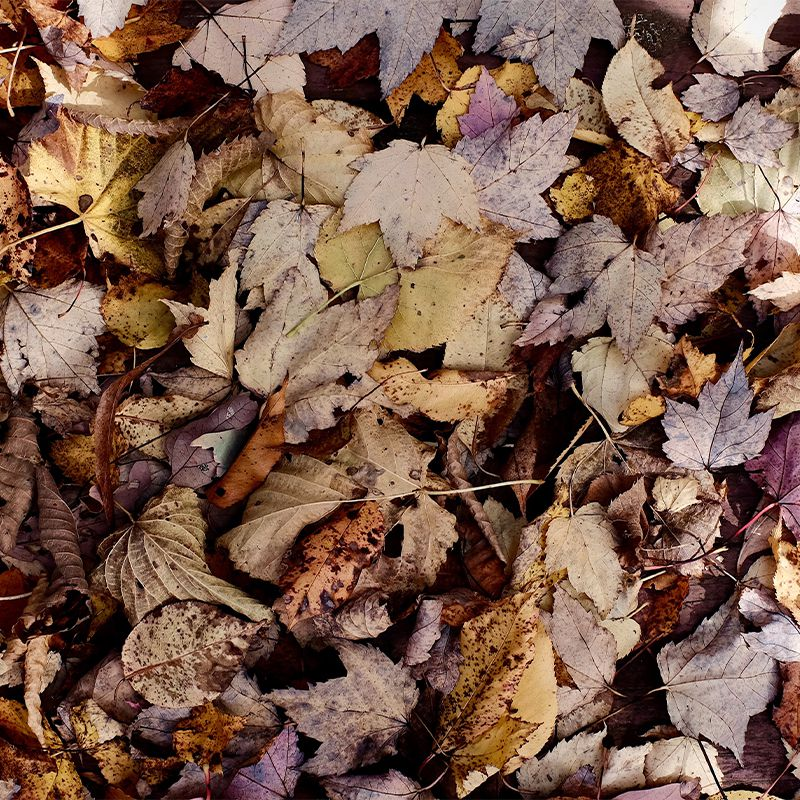 soil compost - piles of rotten leaves