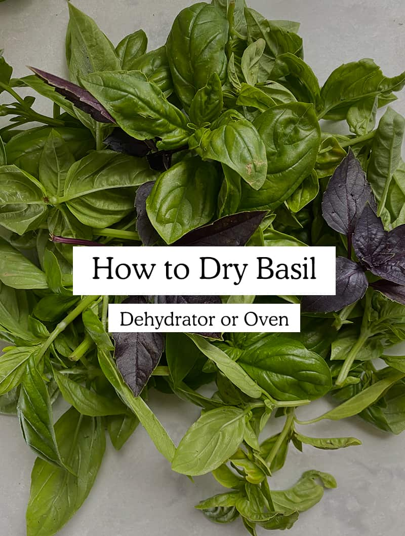 Information on How to Dry Basil from your garden using a dehydrator or an oven