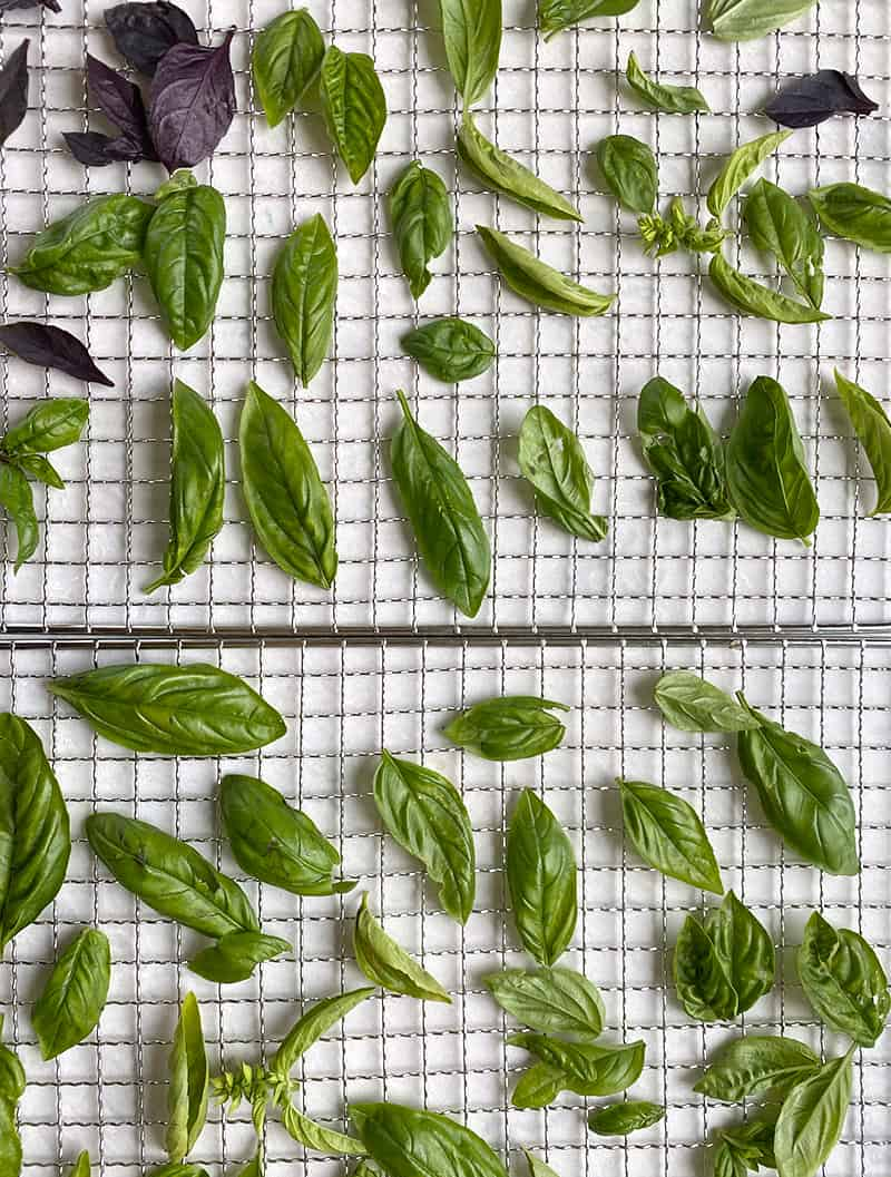 Basil flat on trays for drying