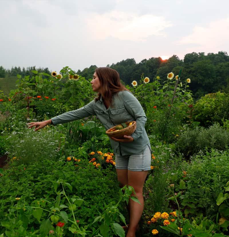 Woman in Garden harvesting