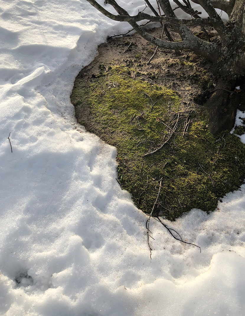 Thoughts from th depths of the January Thaw