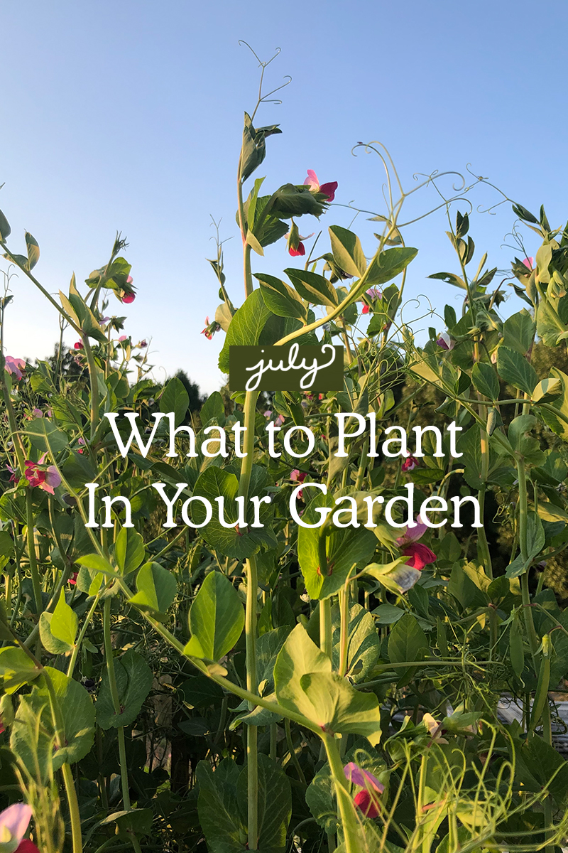 What to Plant in July in Your Garden