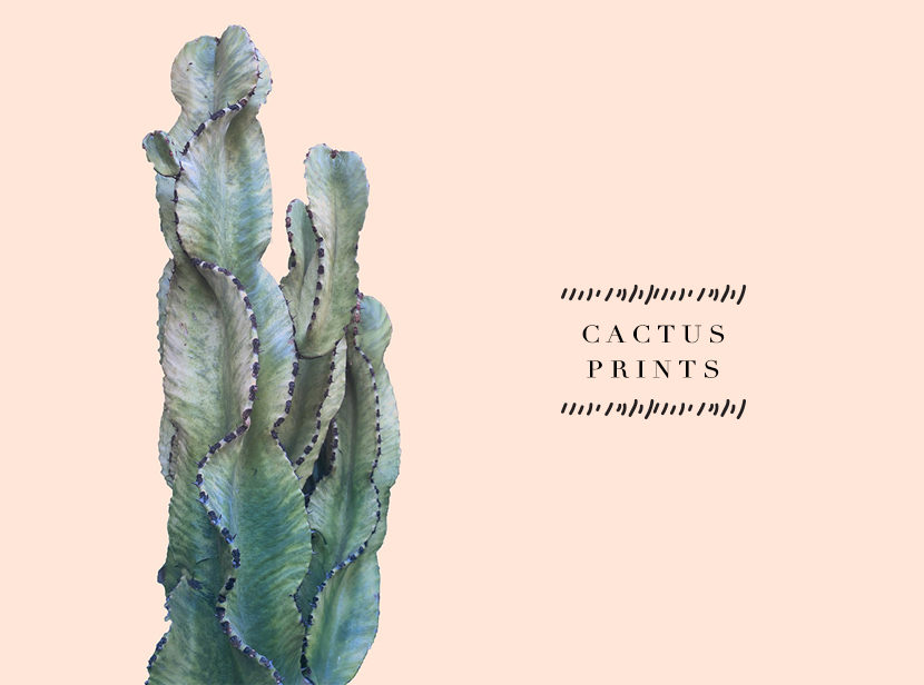 Loving Now: Cactus Prints | The Fresh Exchange