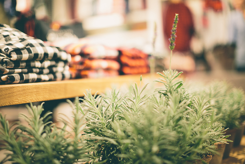 Flannel in the Fields Event with Madewell and Clyde Oak --- The Recap  |  The Fresh Exchange