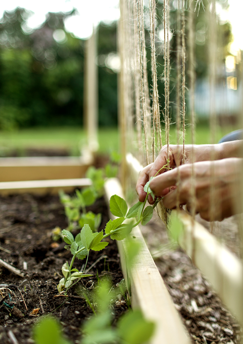Our Raised Bed Garden for summer. Easy and simple garden plan for summer. See more on The Fresh Exchange