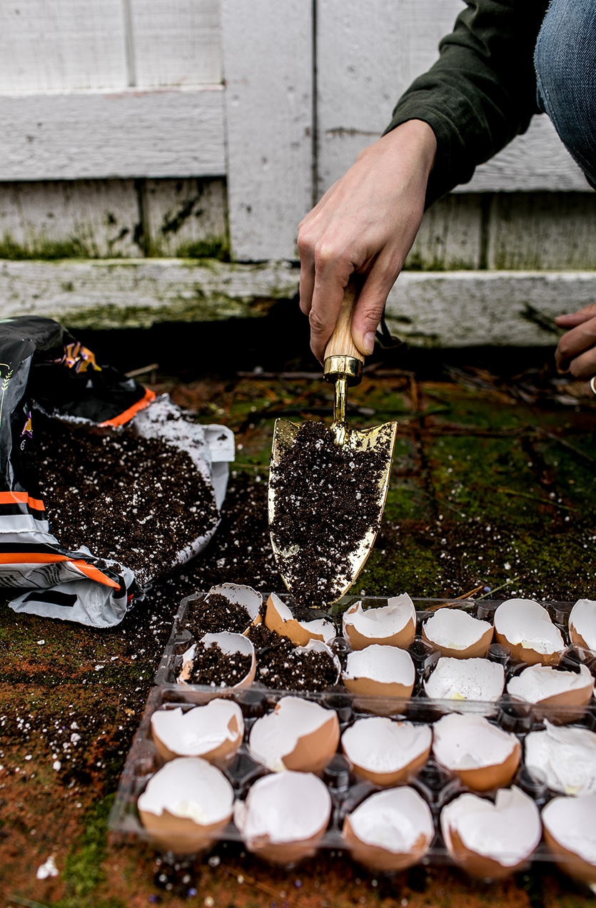 A Simple and easy way to plant your seedlings this spring using egg shells for nutrients and left over egg crates. Very cheap and inexpensive to do. Get the full DIY on The Fresh Exchange.