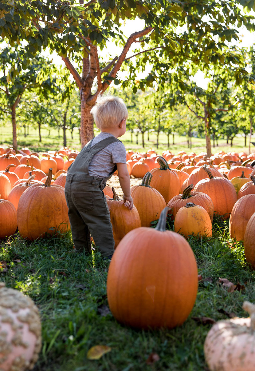 A family tradition of visiting a pumpkin patch in the fall. A great seasonal activity with kids for fall. More on The Fresh Exchange.