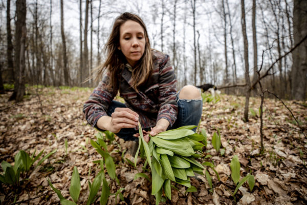 Wild Ramps - Sustainability, Cooking, and How to Harvest