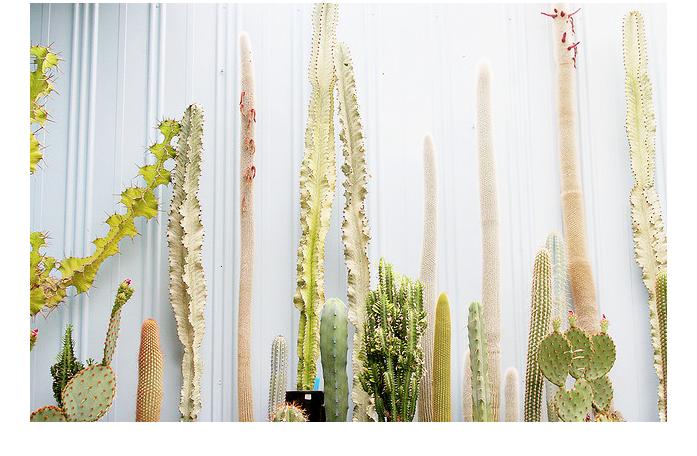 elly yap, cactus
