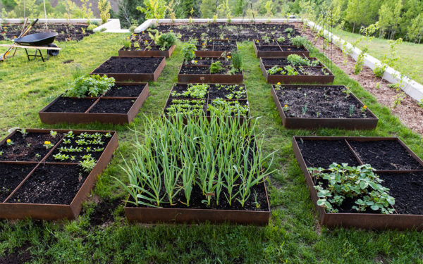 Steel Garden Raised Beds - Everything You need to know.