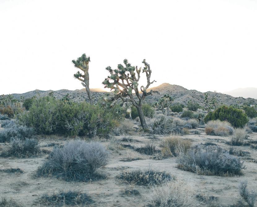 Joshua Tree - A Style Story  |  The Fresh Exchange