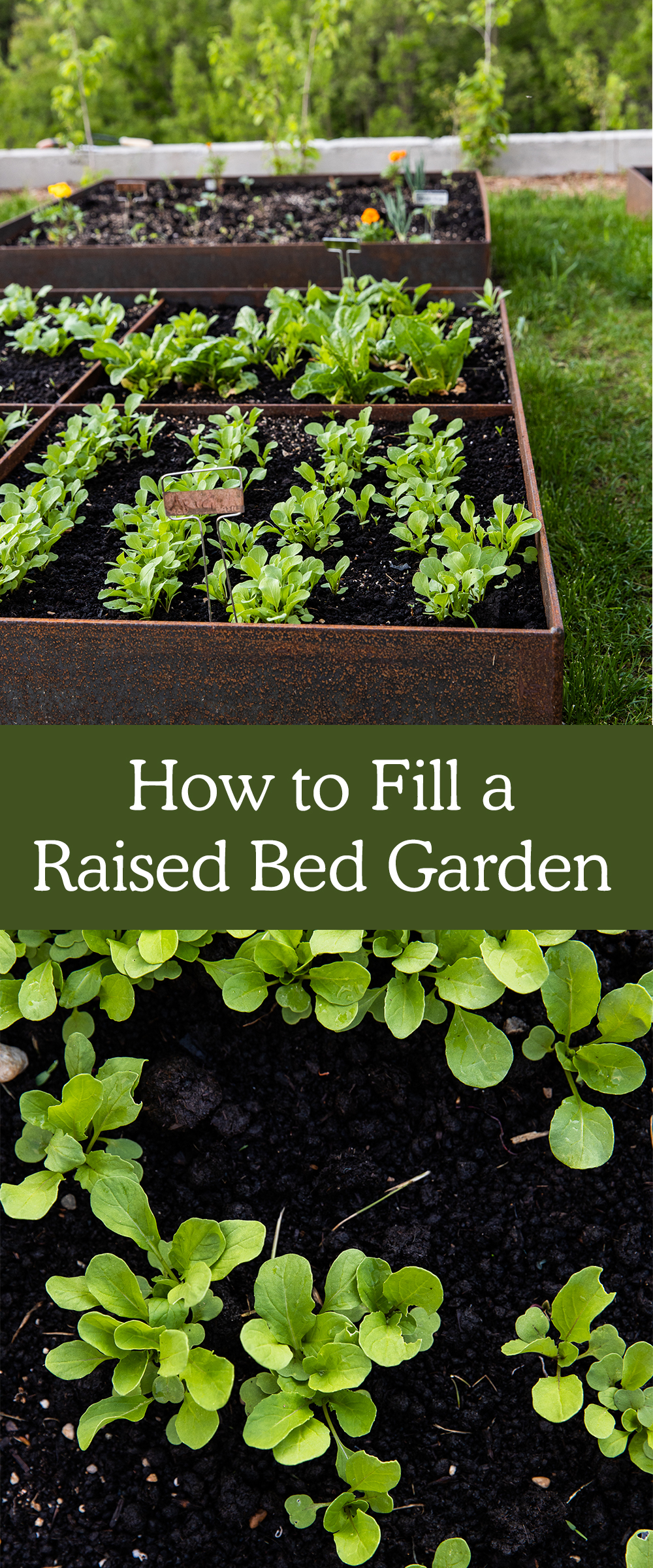 How to fill Your Raised Beds and What til Fill them with. More on The Fresh Exchange