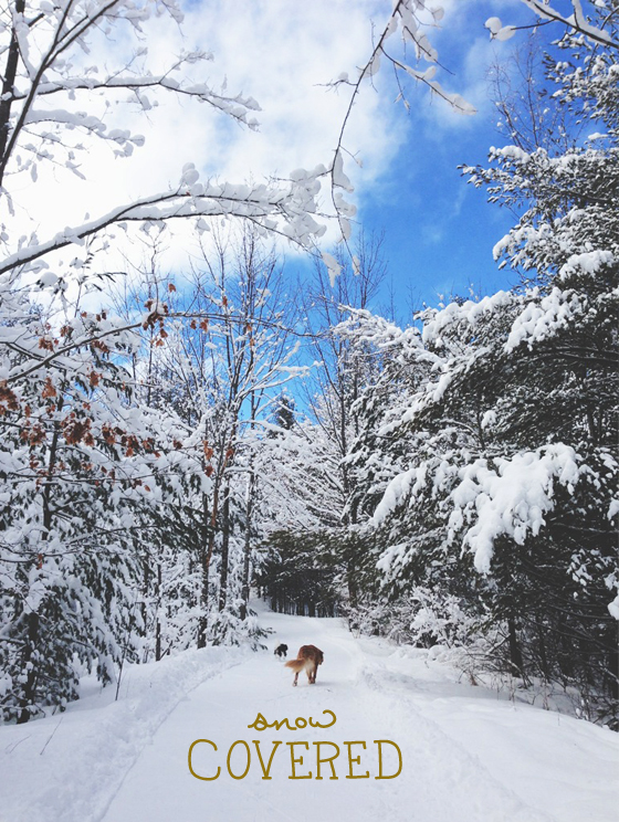 Winter Hike  |  The Fresh Exchange
