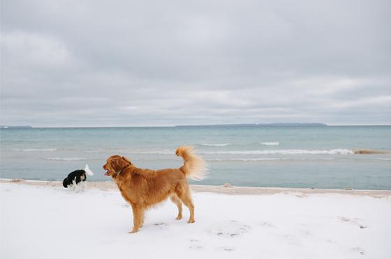 The Fresh Exchange Blog | Leelanau Ice Beach Hike