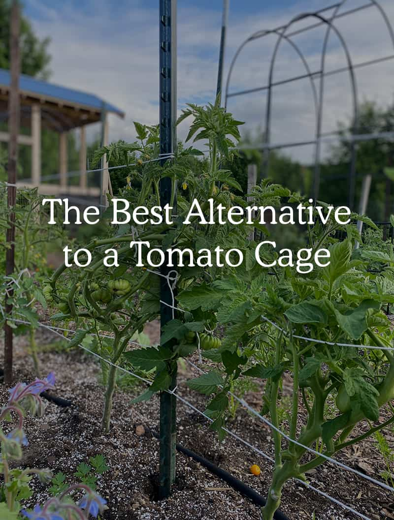 Image with text about alternative to the tomato cage