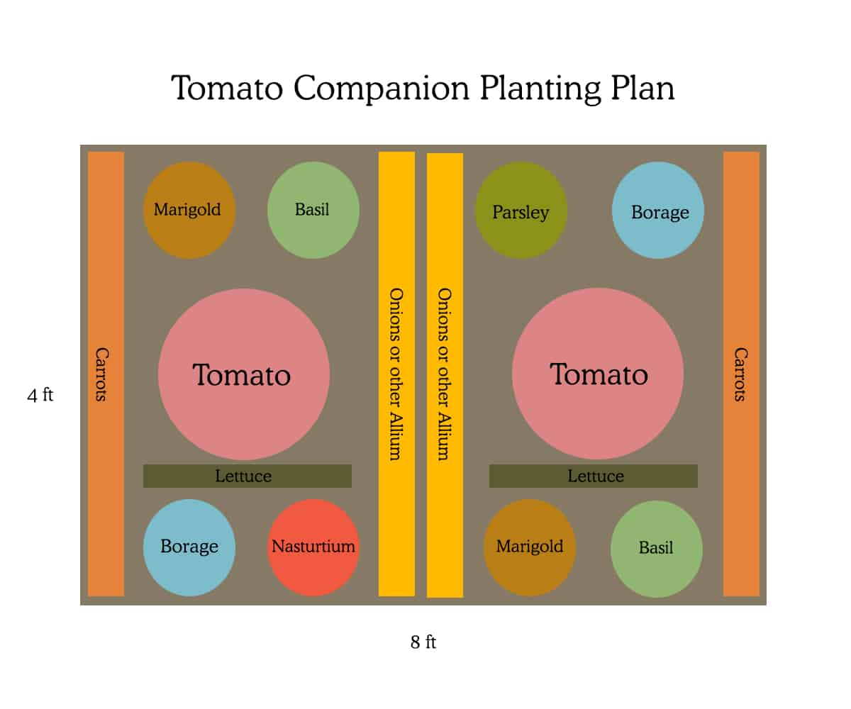 Tomato Companion Planting Design and plan to ward off hornworms.