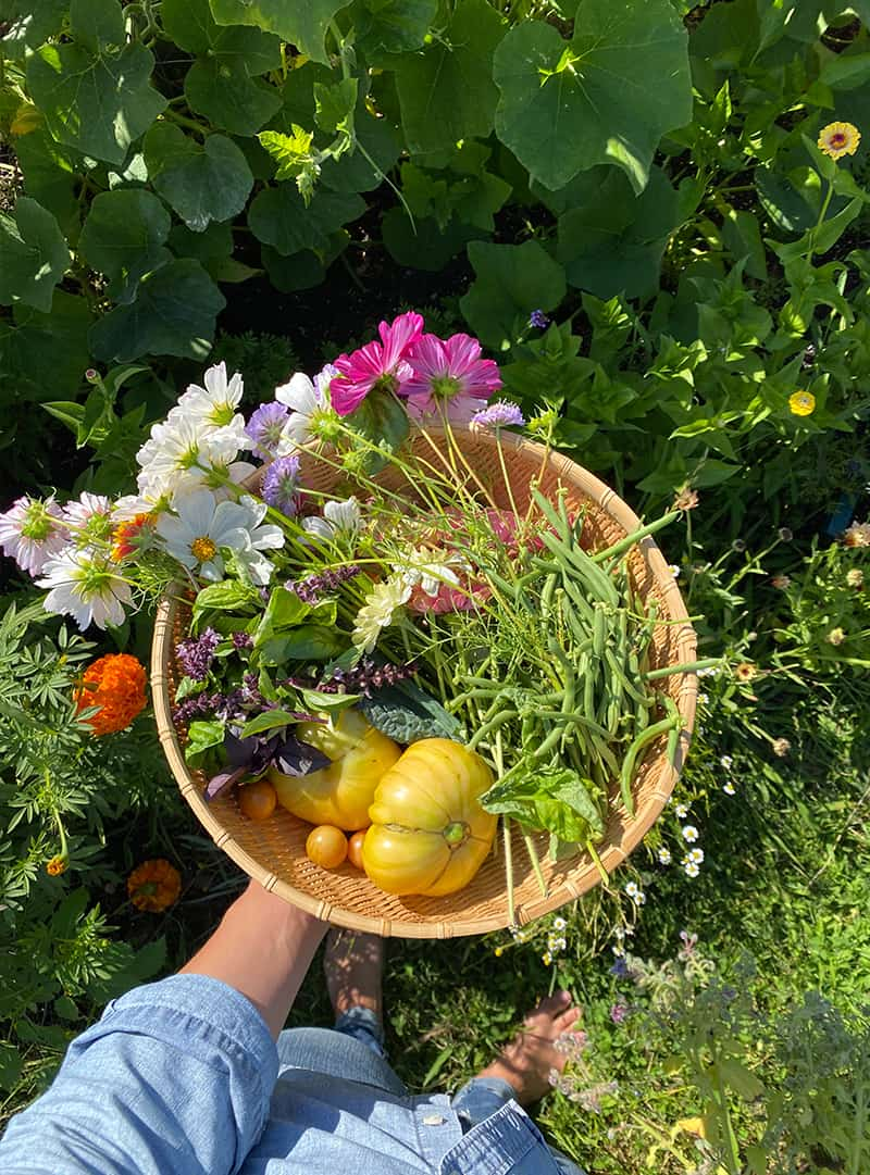 tomato companions - vegetabels together in a basket