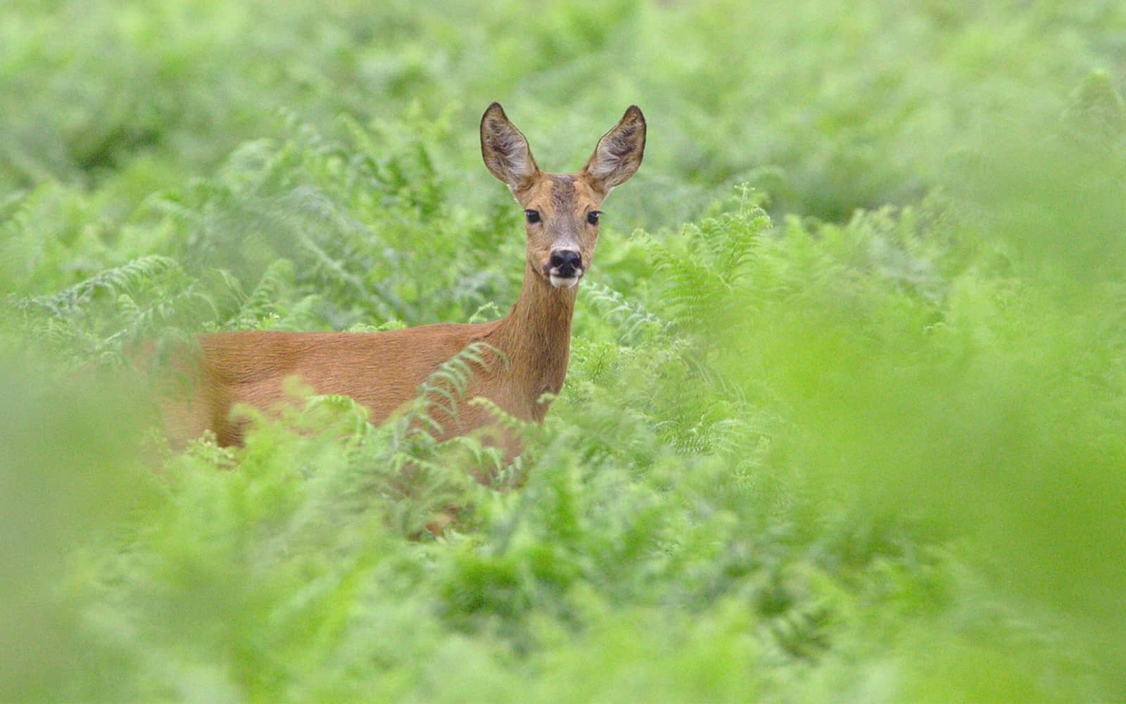 Top Ways to Keep Deer out of the Garden