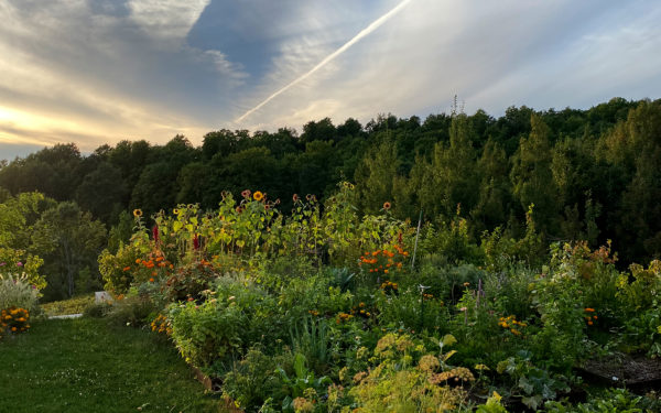 What to Plant in September ---- September Garden