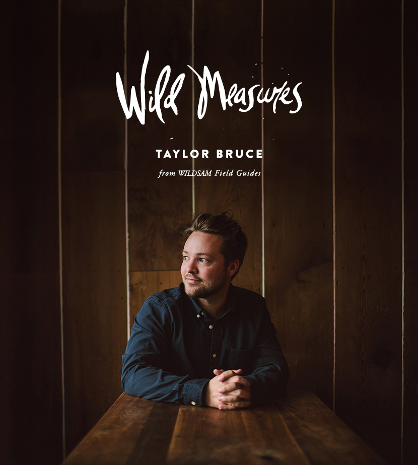 Wild Measures: Taylor Bruce of WildSam Field Guides  |  The Fresh Exchange