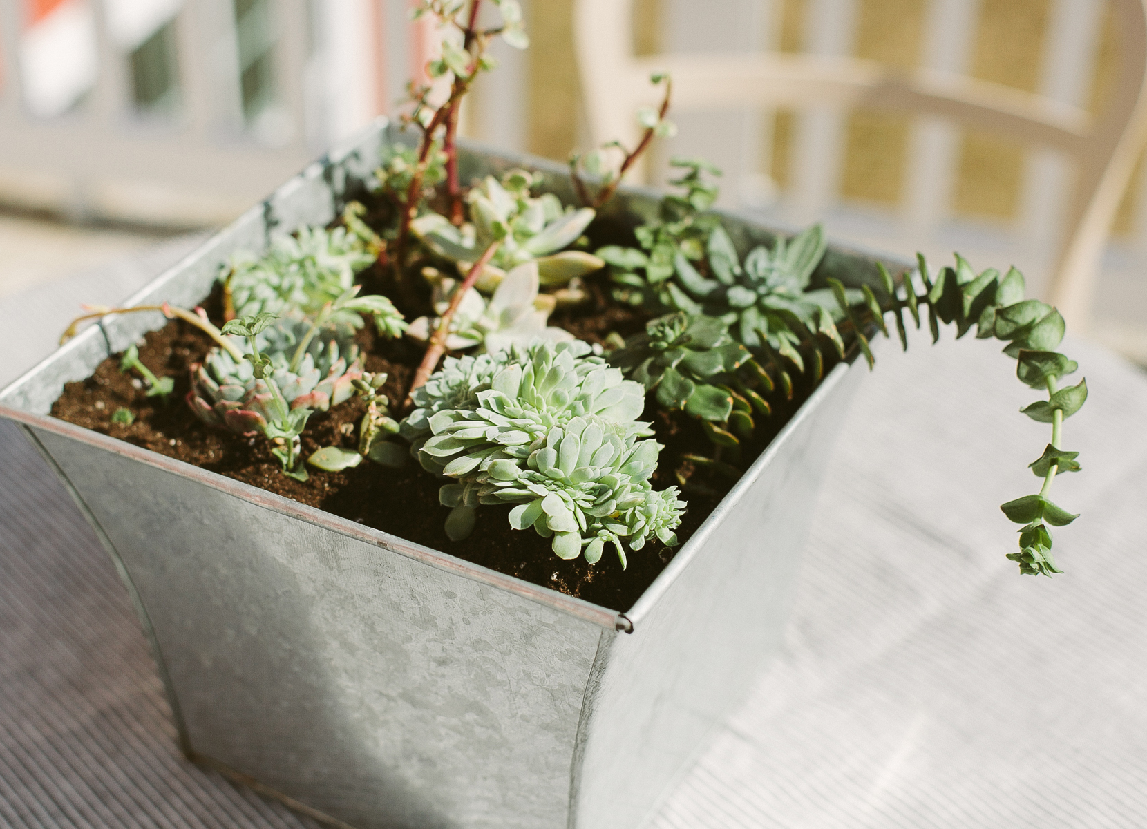 Succulent Planting 101  |  The Fresh Exchange