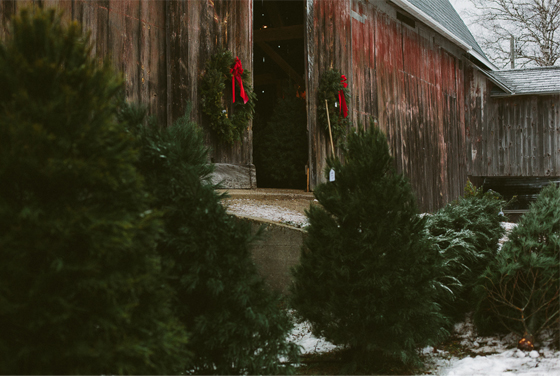 tree hunt, northern michigan, williams tree farm, traverse city, michigan, snow, christmas, winter