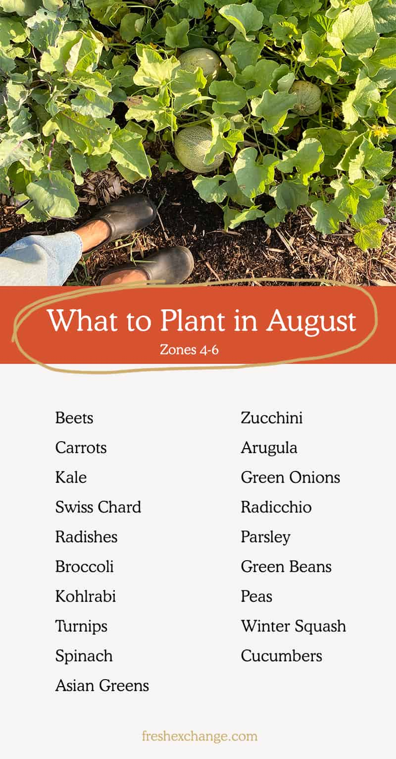 List of things you can plant in August in your garden. Including zones 4-6