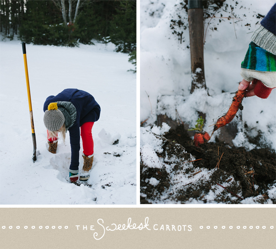 winter harvest, traverse city, michigan, winter, snow, carrots