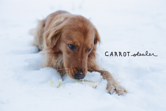 winter harvest, traverse city, michigan, winter, snow, carrots
